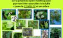 COVID-19 : Livret pratique des plantes médicinales